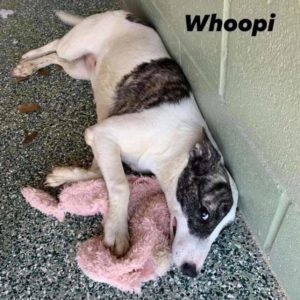 Whoopi **Looking for a Foster or FTA**